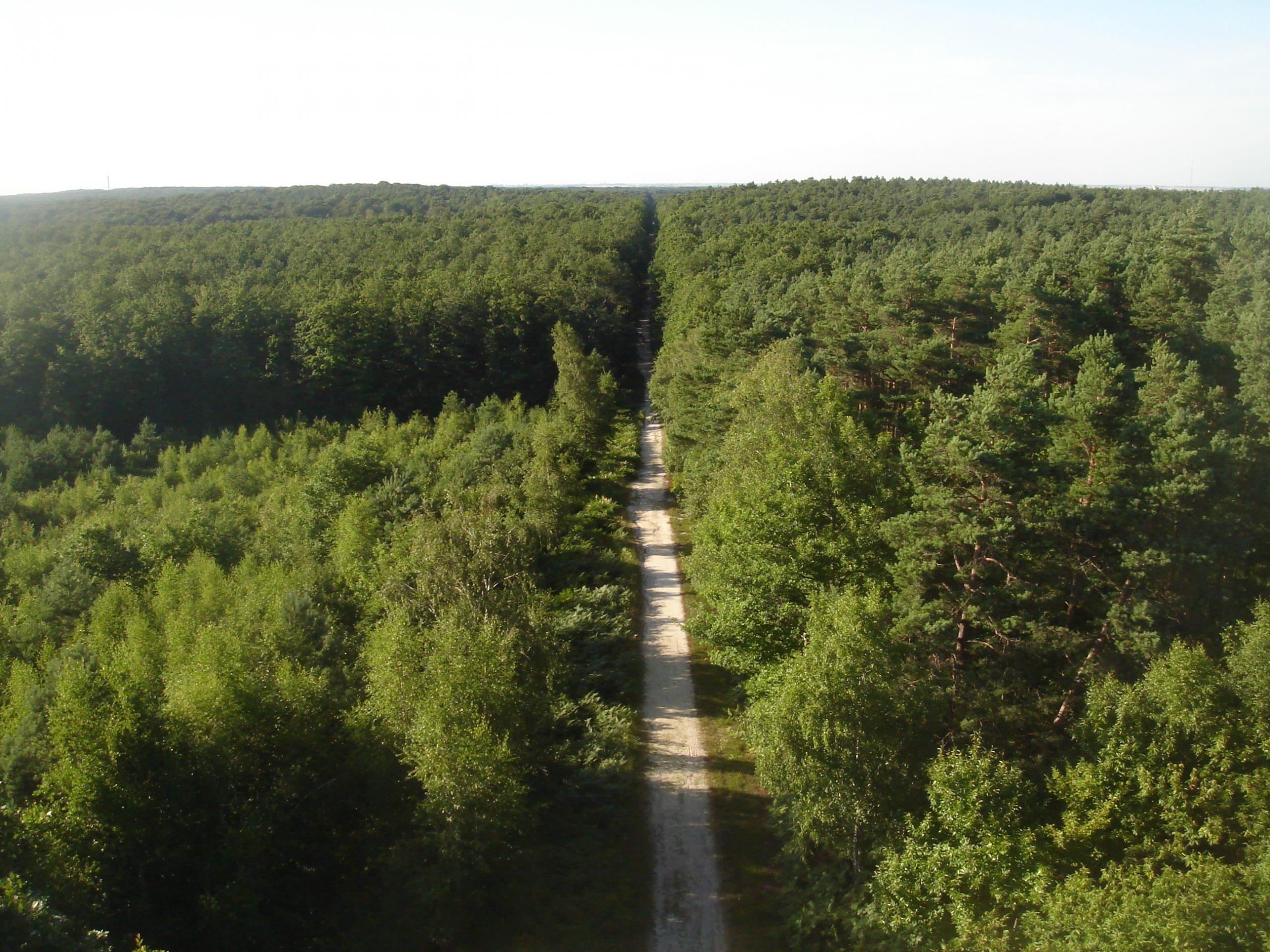 Photo de la Forêt d'Orléans depuis le belvédère de la butte des Caillettes