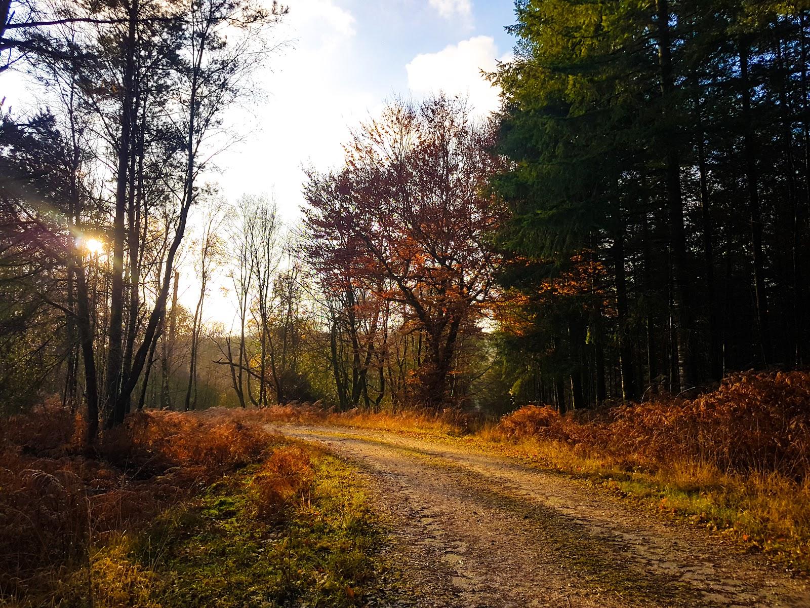 Photo de la Forêt des Andaines à l'automne