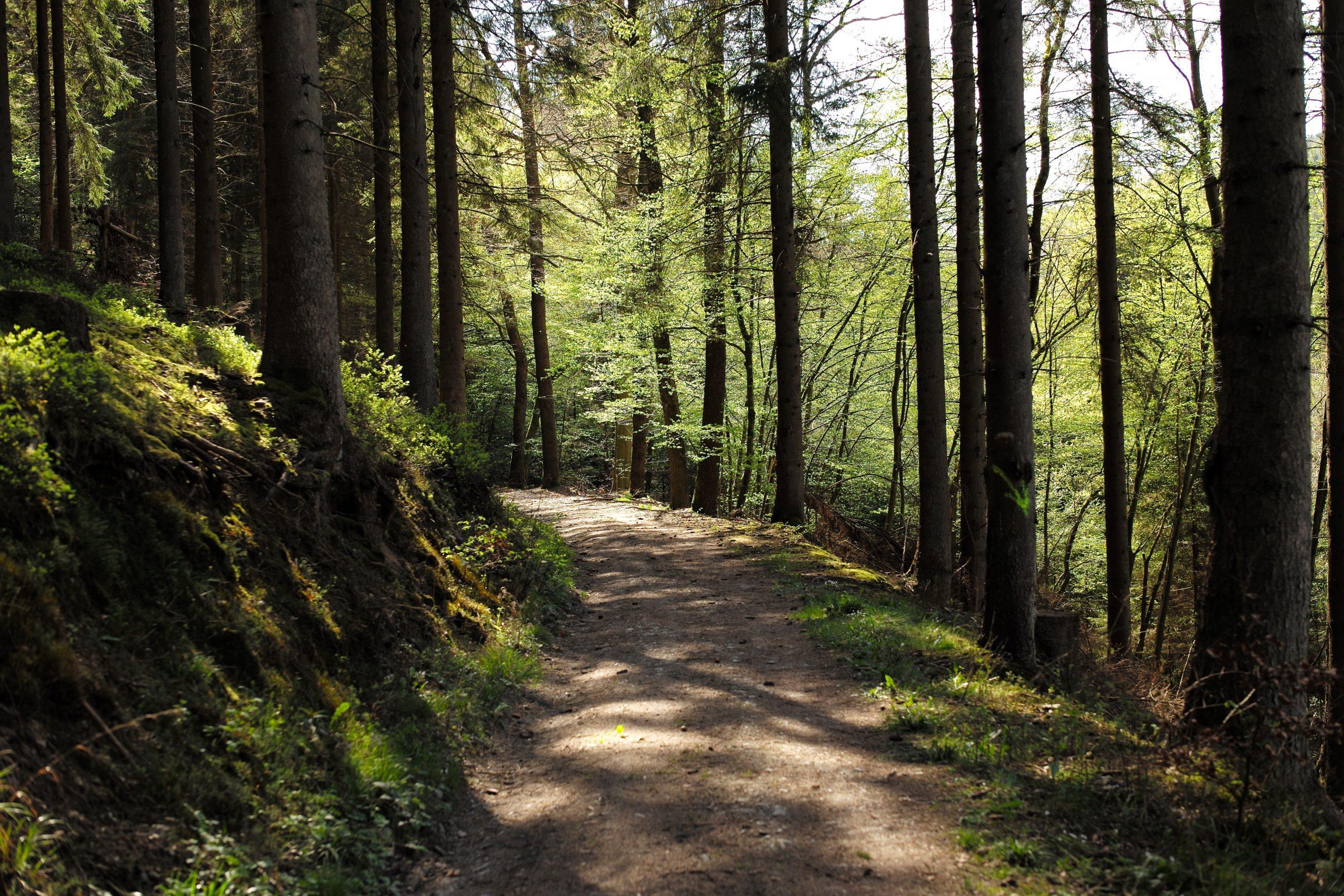 Forêt des Ardennes