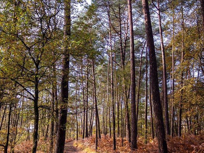 Forêt des Andaines