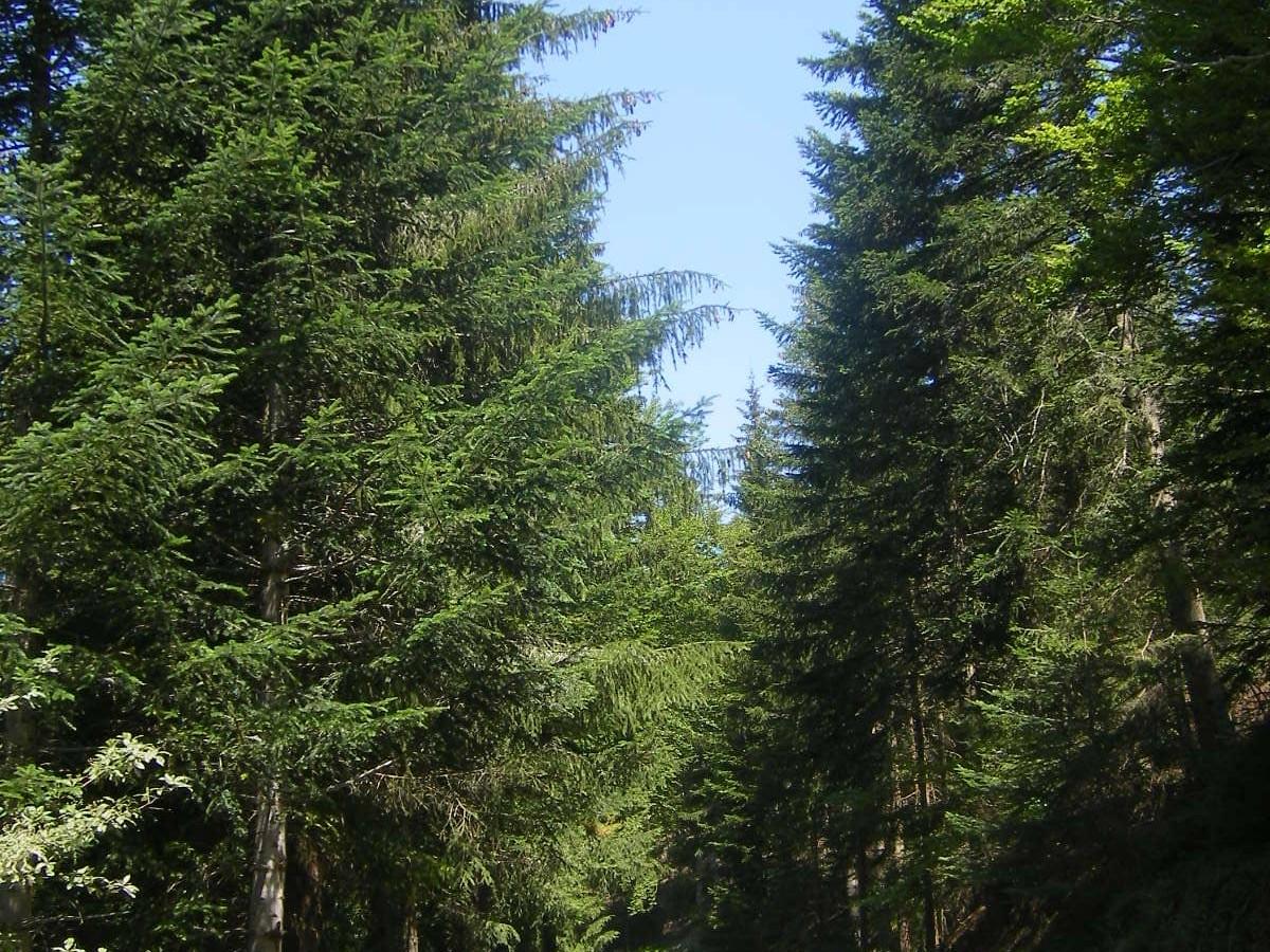Forêt de Mercoire