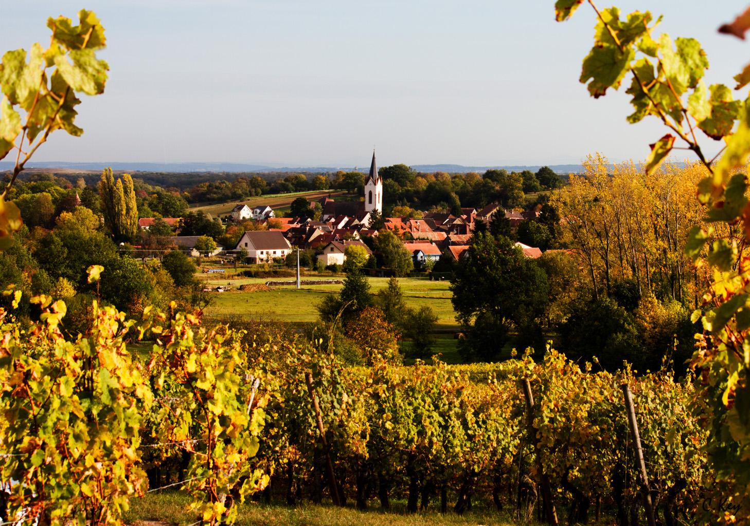 Routes des Vins d'Alsace