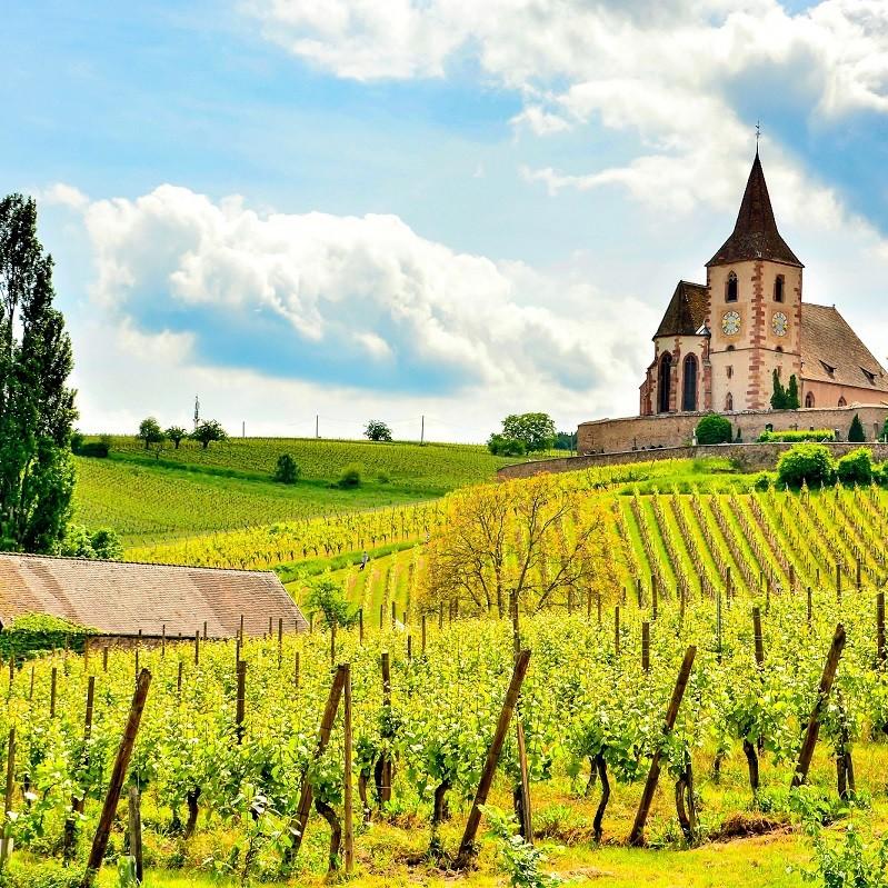 Vignes en Alsace