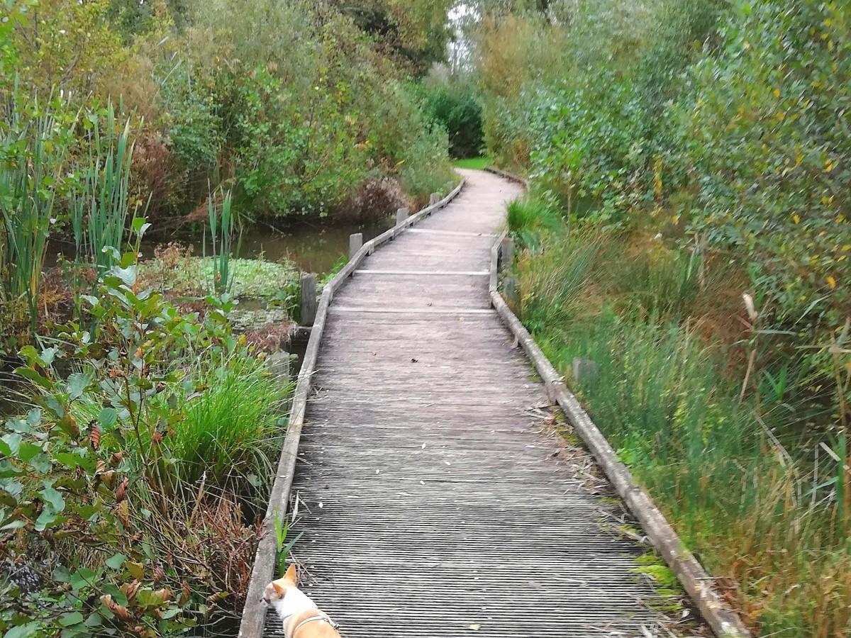 réserve naturelle du Marais de Condette