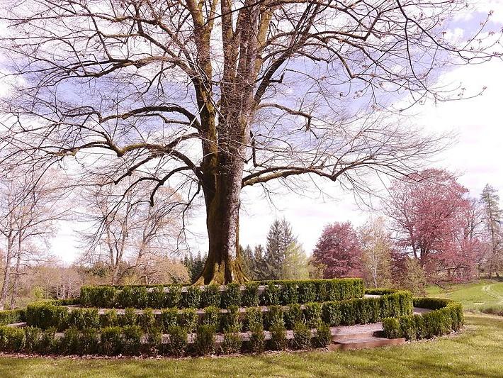 Arboretum Château de Neuvic d'Ussel