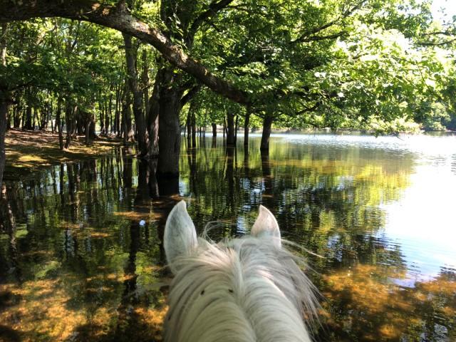Domaine de Courcelles cheval eau