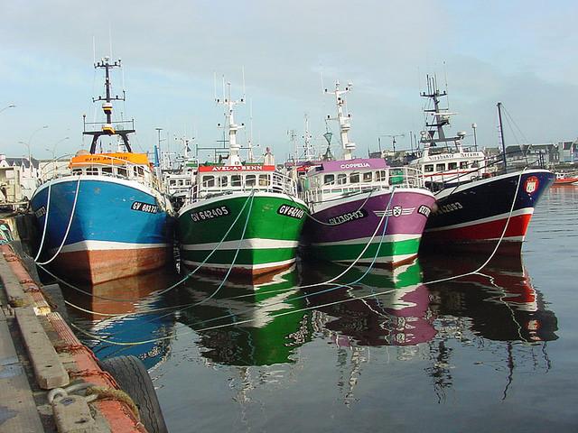 Douarnenez port de pêche