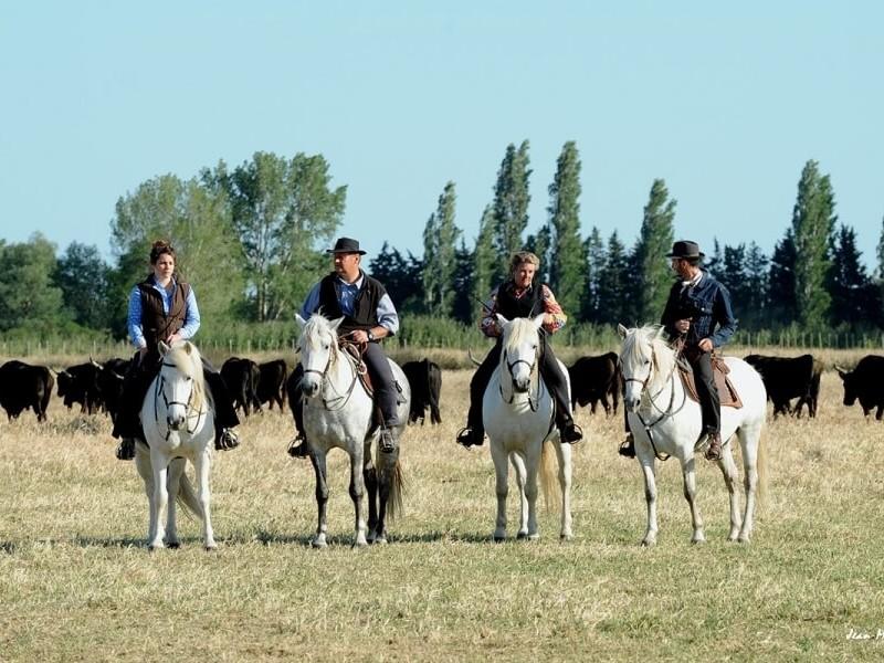 Manade Cavallini chevaux