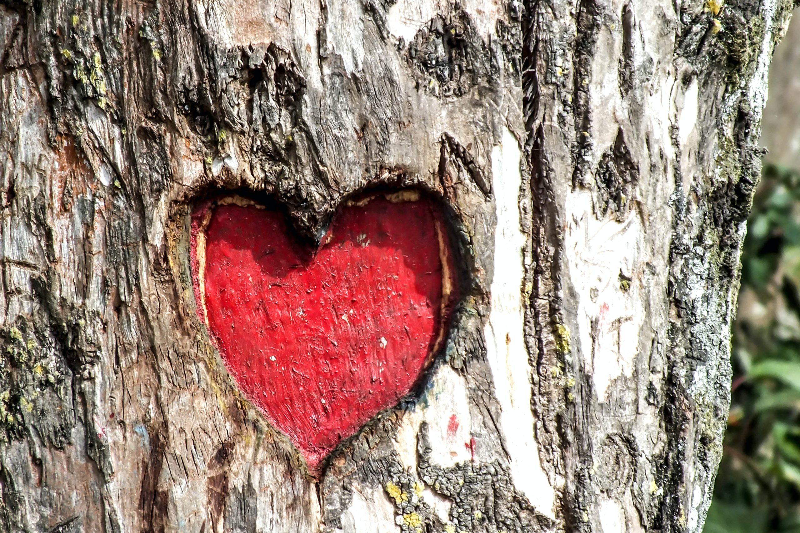 arbre gravé cœur