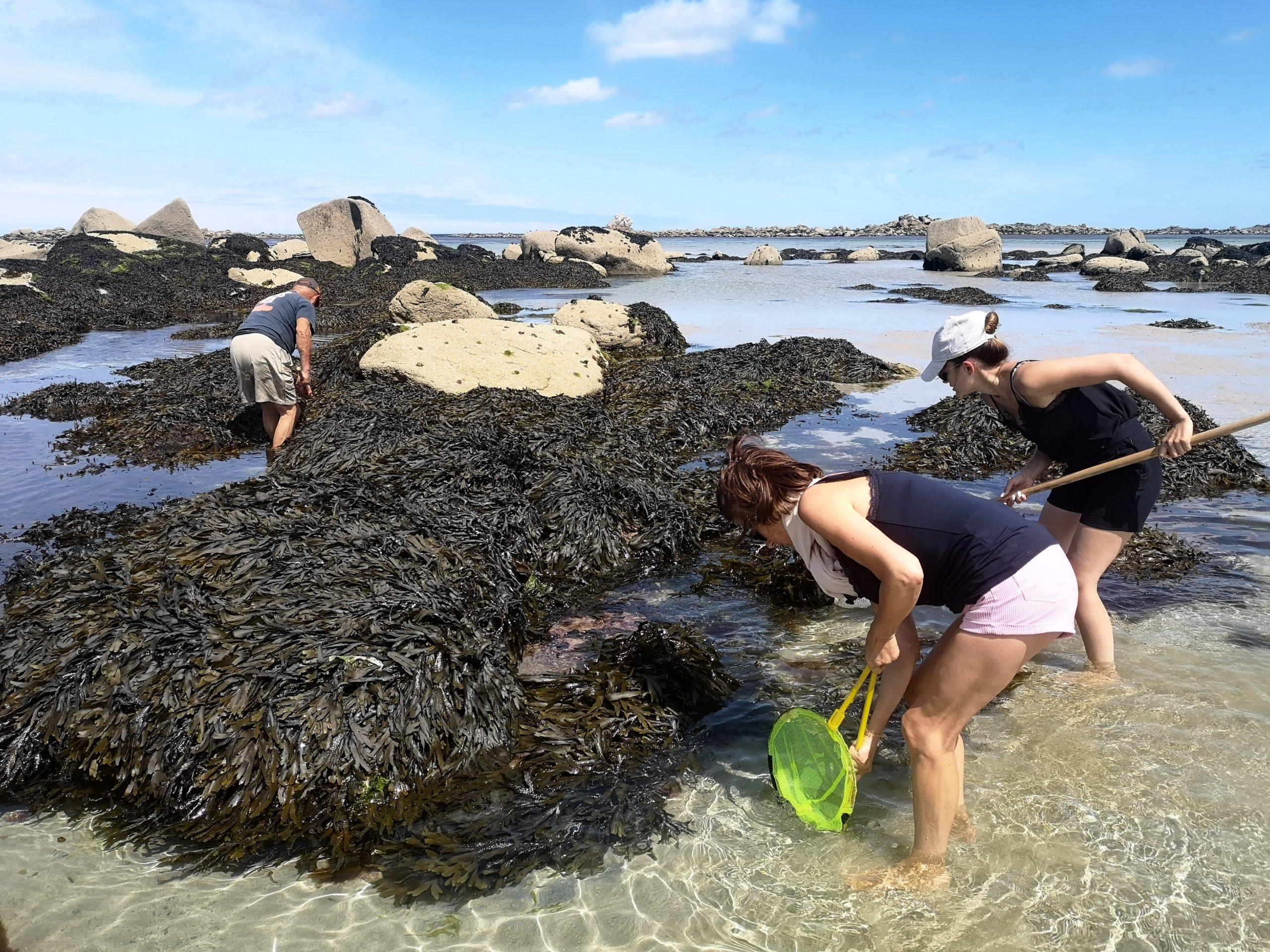 Pêche aux crustacés à Kerurus
